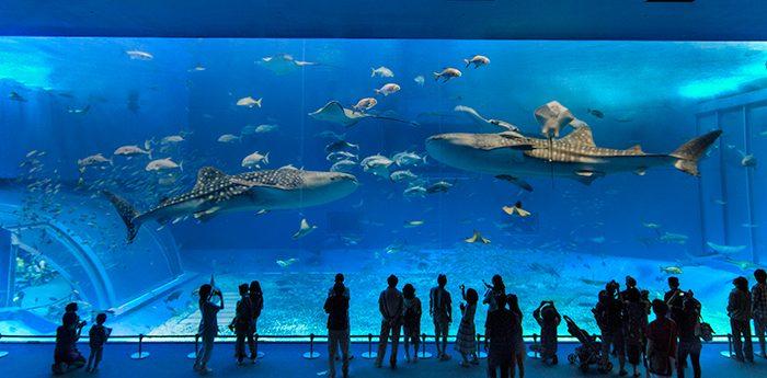 Alla scoperta degli acquari più mozzafiato del mondo